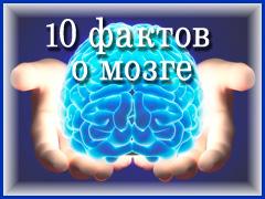 О мозге